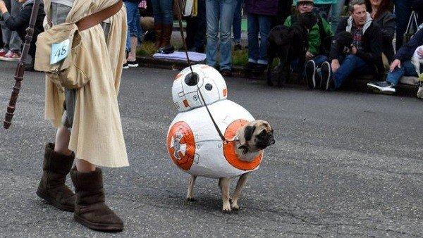 Star Wars: A falta de droides de verdad, Oregon recibe un desfile... ¡de carlinos disfrazados!