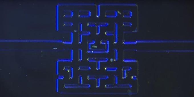 Unos microorganismos juegan a Pac-Man para sobrevivir