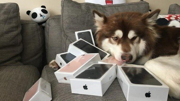 iPhone 7: El hijo de un magnate chino le compra ocho móviles a su perro