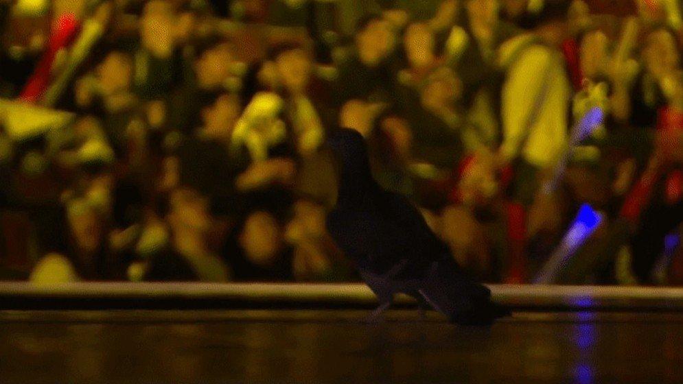 League of Legends: Una paloma se convierte en la protagonista de un torneo