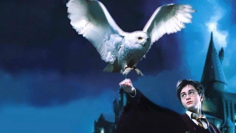 Harry Potter motiva el tráfico ilegal de lechuzas en Indonesia